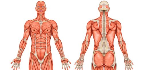 Review Of Human Anatomy & Physiology Course By Dr. James Ross